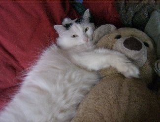 The cat Lilly with her teddy bear